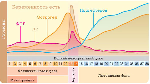 график полного менструального цикла (беременность есть)