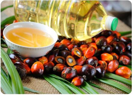 Пальмовое масло и семена пальмы
