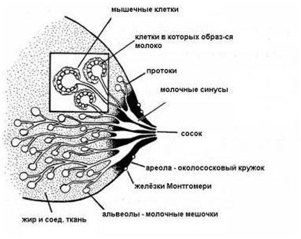 zastoy-moloka