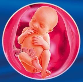 Малыш на 25 неделе беременности