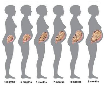 4-9 недели