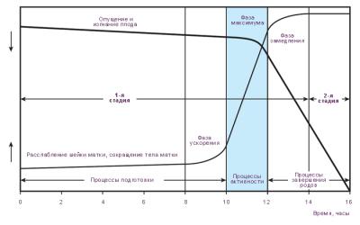График динамики родов
