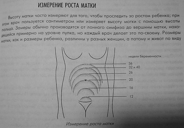 Измерение роста матки