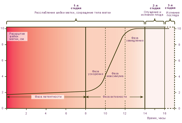 Клинические стадии и фазы родов