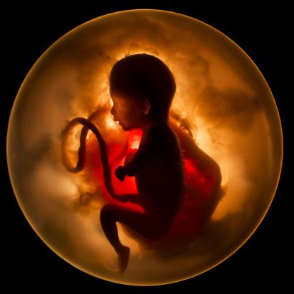 Особенности имплантации эмбриона при экстракорпоральном оплодотворении