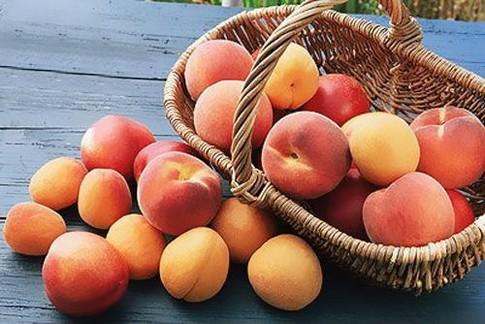 Персики разрешены при лактации