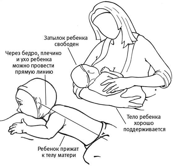 Правила грудного вскармливания
