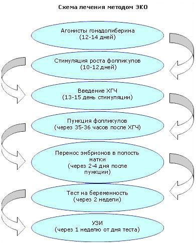 Программа ЭКО