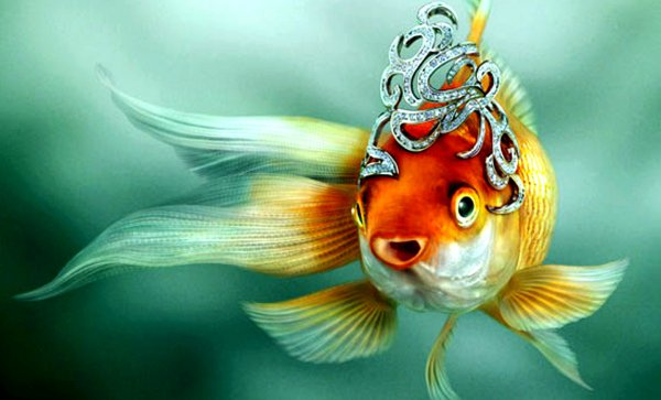 Сон о рыбалке - к беременности