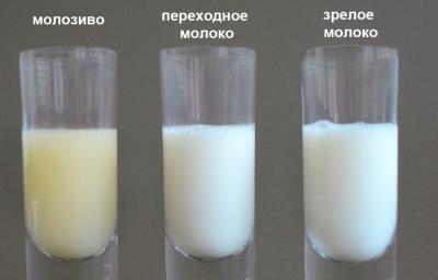 Цвет молока