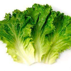 Польза листьев салата при грудном вскармливании