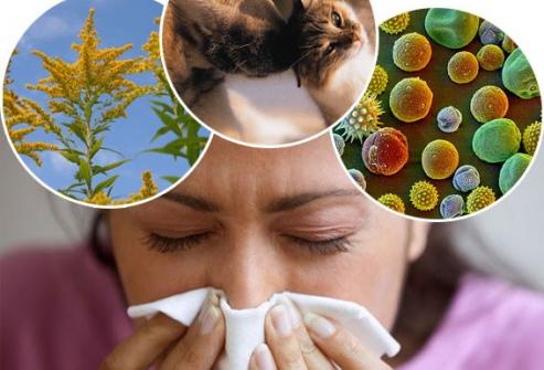 Возбудители аллергии при беременности на первом триместре