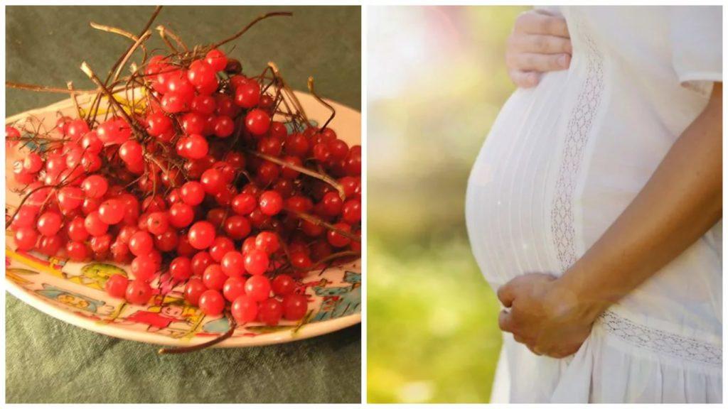 Калина при беременности