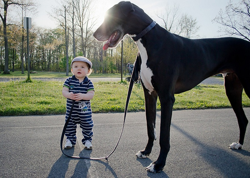 Мальчик и большая собака