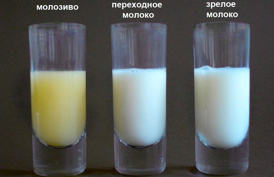 Грудное молоко на разных этапах лактации