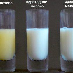 Как определить жирность грудного молока и стоит ли о ней беспокоиться