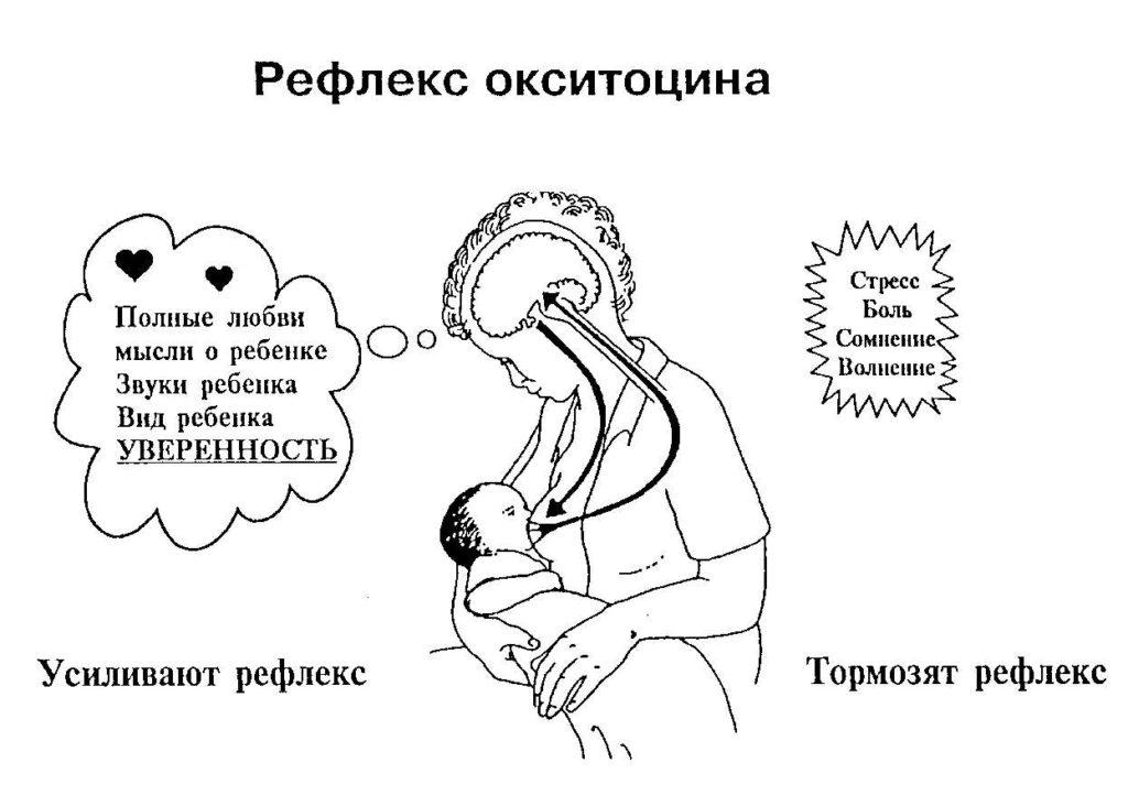 Рефлекс окситоцина