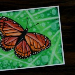 Рисунок бабочки для начинающих