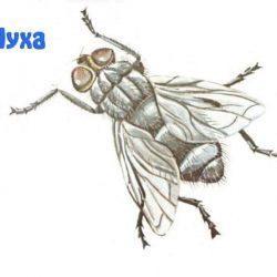 Изучаем насекомых с ребенком