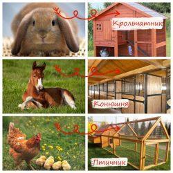 Домашние животные — кто где живет