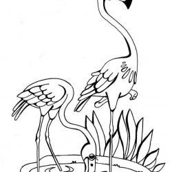 Фламинго - раскраски