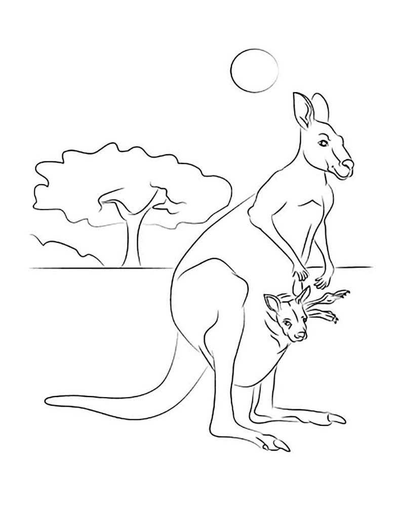 кенгуру для раскрашивания первом