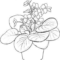 Комнатные цветы - раскраски