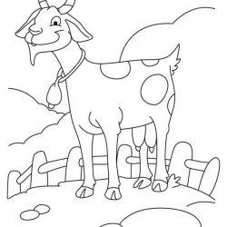 Коза и Козёл - раскраски