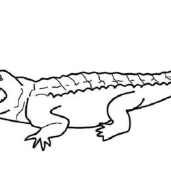 Крокодил - раскраски