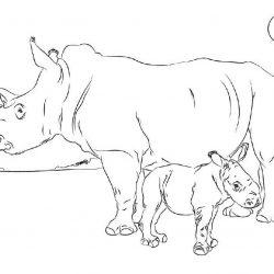 Носорог - раскраски
