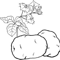 Овощи - раскраски
