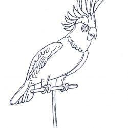 Попугай - раскраски