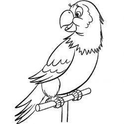 Попугай — раскраски