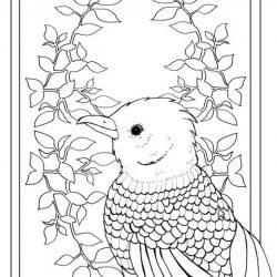 Птицы — раскраски часть 2