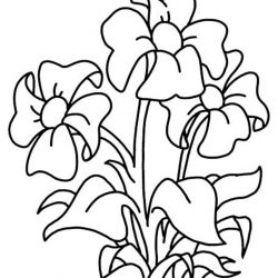 Растения - раскраски