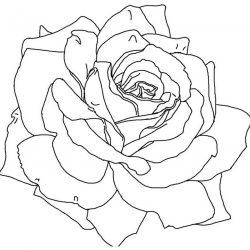 Розы - раскраски