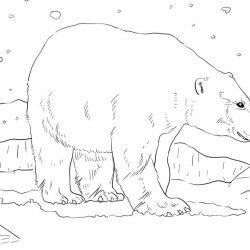 Животные на севере раскраски