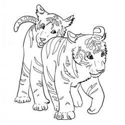Тигр - раскраски