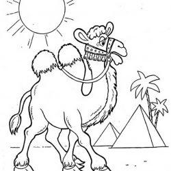Верблюд - раскраски