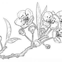 Весна - раскраски