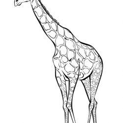 Жираф - раскраски