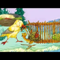 Сказка — Чайка и черепаха